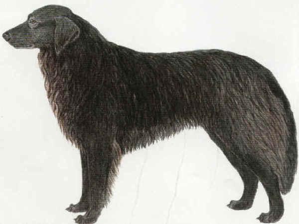 Resultado de imagen para perro ovejero